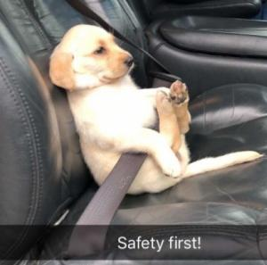 첫 나들이 두근두근…안전벨트 매야지